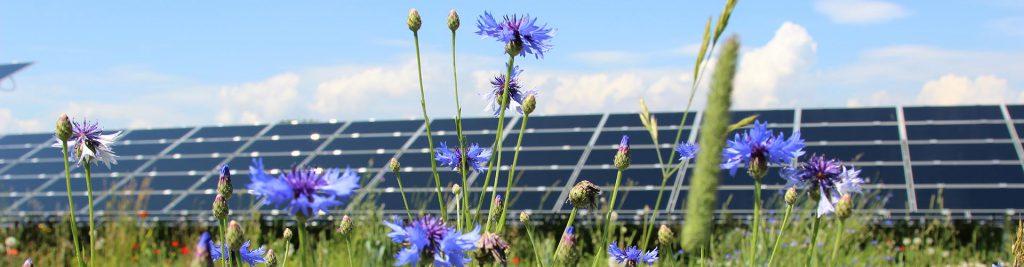 Photovoltaik auf der Freifläche. Foto: Andreas Klatt