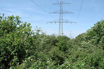 Ökologisches Trassenmanagement kann den Biotopverbund stärken | Foto: NABU-Stiftung Nationales Naturerbe/Inés Noll