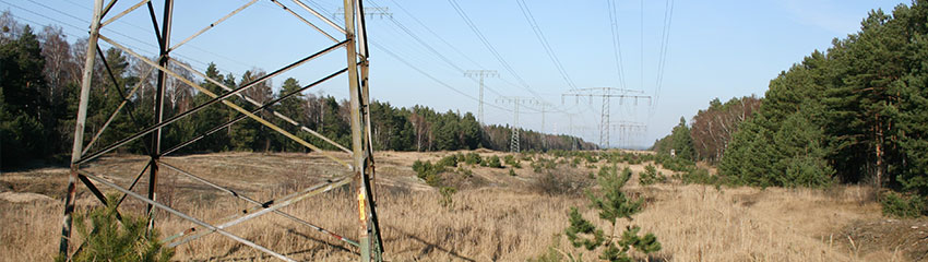 Eine Stromtrasse zerschneidet ein Waldgebiet | Foto: NABU/Eric Neuling