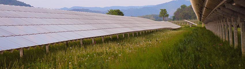 Auch zwischen Photovoltaik-Anlagen kann vielfältiges Grünland entstehen | Foto: Dialogforum Erneuerbare Energien und Naturschutz